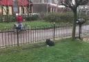 Pati Şeyler - Yalnız köpek Gizmo Facebook
