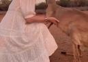 Pati Şeyler - Yangından kaçıp kurtarılan kangurunun...