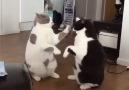 Patty-cat