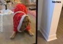 Pets Story - Christmas Season Facebook