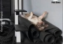 Pets Story - Lazy dogs Facebook