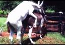 Pet TV - Funny Moments le 25 mai