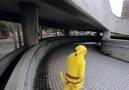 Pikachu Parkour
