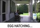 Pokemon GO'da Yumurta Çatlatma