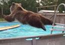 POOL BEAR FTW!