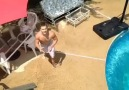Pool shot !