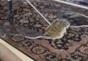 Power of Positivity - Rug Cleaning Is so Enjoyable to Watch Facebook
