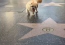 Pozitif - Instagram&en sevimli köpek