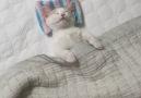 Precious sleeping baby