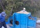 Pülümürde hasat vakti...