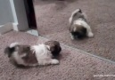Puppies And Kittens Vs. Mirrors
