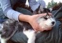 Puppy gets full body massage