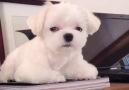 Puppy needs a hug