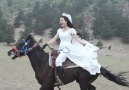 Pure Land - Pure land of beautiful horses! Facebook
