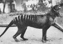 Rare footage of some extinct animal species.