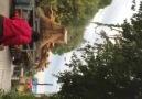 Recep Öztürk - Antik gemi Patara ya ulaştı