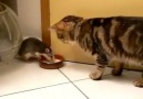 Remember TOM & JERRY ..they are real...haha