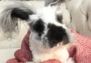 Rescued Angora Rabbit Has The Best Life now