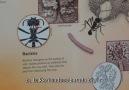 Richard Dawkins çiftçi karıncaları anlatıyor.