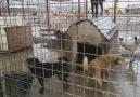 Romanya Hayvanların Cehennemi !