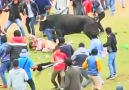 Running of the bulls event goes wrong