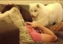 Sahibinden kucak isteyen köpek