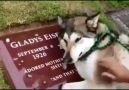 Sahibinin mezarında ağlamak