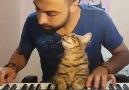 Sahibinin Müzik Çalmasıyla Kendinden Geçen Kedi