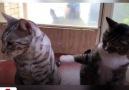 Sahibinin sorduğu soru karşısında arkadaşını ele veren kedi