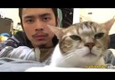 Sahibiyle Ortak Müzik Zevki Olan Kedi