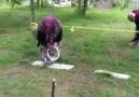Sakaryalı 72 yaşındaki dede eşiyle bahçelerinde SURVİVOR yaptı