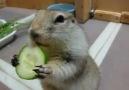 Salatalık Böyle Yenir :))