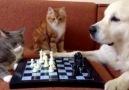 Satranç şampiyonasında yanlı hakem skandalı D