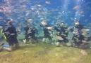 scuba diving :-)