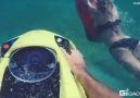 Sea Bob