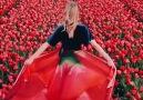 Sea of tulips.