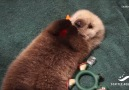 Sea Otter Pup's Incredible Story of Survival