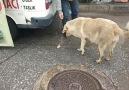 Şefkati ile Duygulandıran Köpek Kardeş