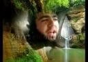 Şehid inşeALLAH HUZEYHE'den Bal ARısı taliban...Neşid :)