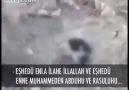 Selahattin Özgündüz'ün övdüğü Nusayri köpekler!