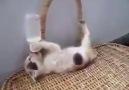 Seni Gidi Aç Gözlü Kedi