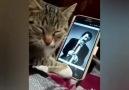 Seni o kadar iyi anlıyorum ki kedi