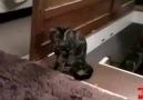 şerefsiz kedi :D