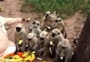Sessiz Çığlık - Bugün 4 Ekim Hayvanları Koruma Günü...