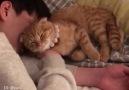 Sevgi Patlaması Yaşayan Kedicik