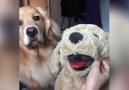 Sevimli köpek dostumuzun halinden anlayanlar burda mı haberturk.comvideo