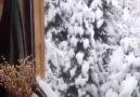 Sibel Can Kış Masalı - SEVDALI TÜRKÜLER