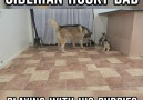 Siberian Husky Dad Playing With His Puppies