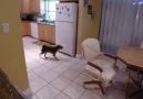 Şimdiye kadar gördüğüm en akıllı köpek.!!