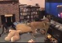 Sinirli köpek